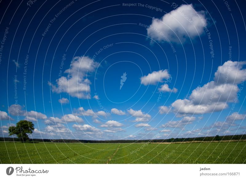 Zeit die nie vergeht. Himmel Baum blau Pflanze Wolken Frühling Landschaft Feld Hintergrundbild Geschwindigkeit Brandenburg Spargel Ordnungsliebe Spargelfeld