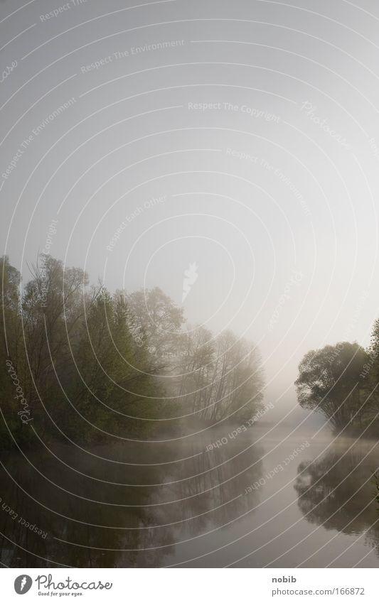 Flussnebel 2 Natur Wasser grün Baum Landschaft Holz grau Nebel