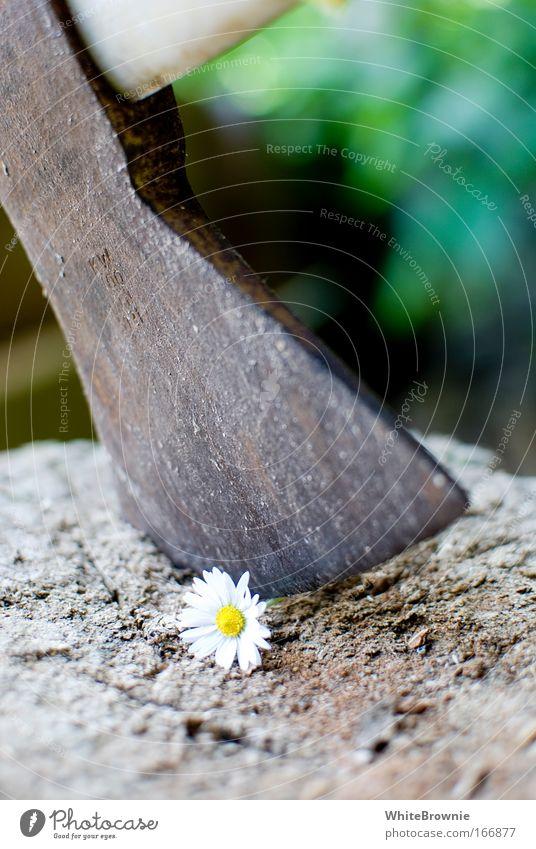 armes Ding Farbfoto Außenaufnahme Tag Schwache Tiefenschärfe Blume Holz Stahl Aggression Frühlingsgefühle Traurigkeit