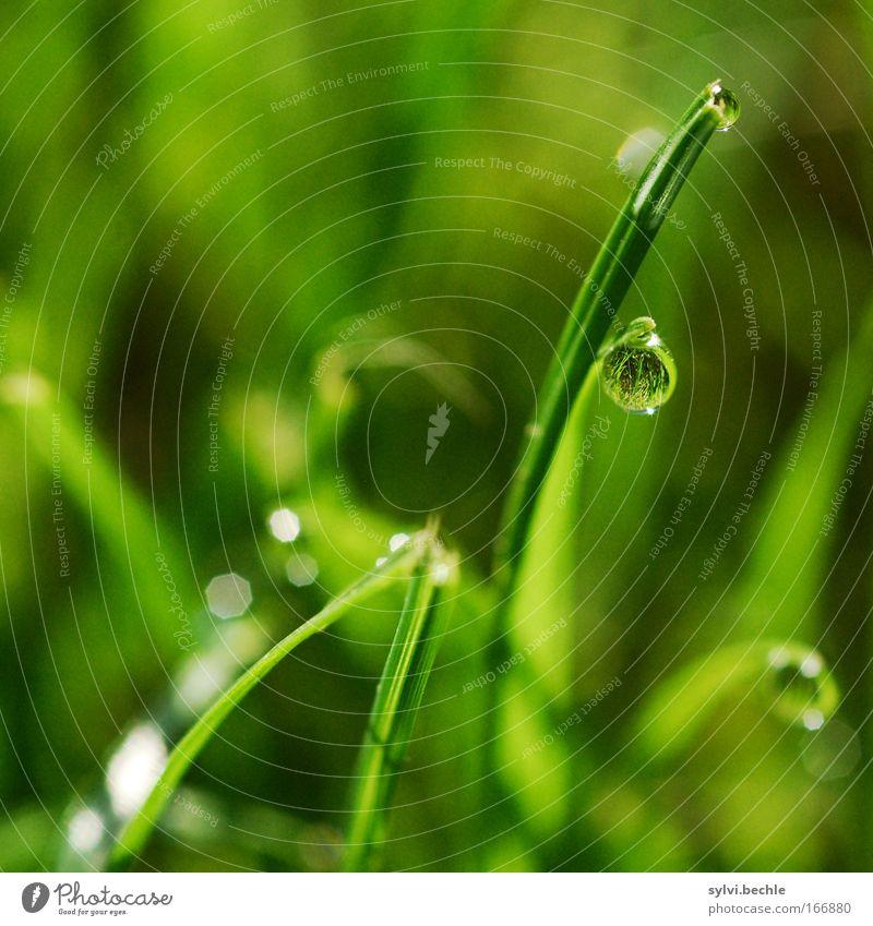 pearl Natur Pflanze grün Wasser Einsamkeit ruhig Leben Wiese Gras Stimmung Regen träumen glänzend Textfreiraum Wassertropfen Klima