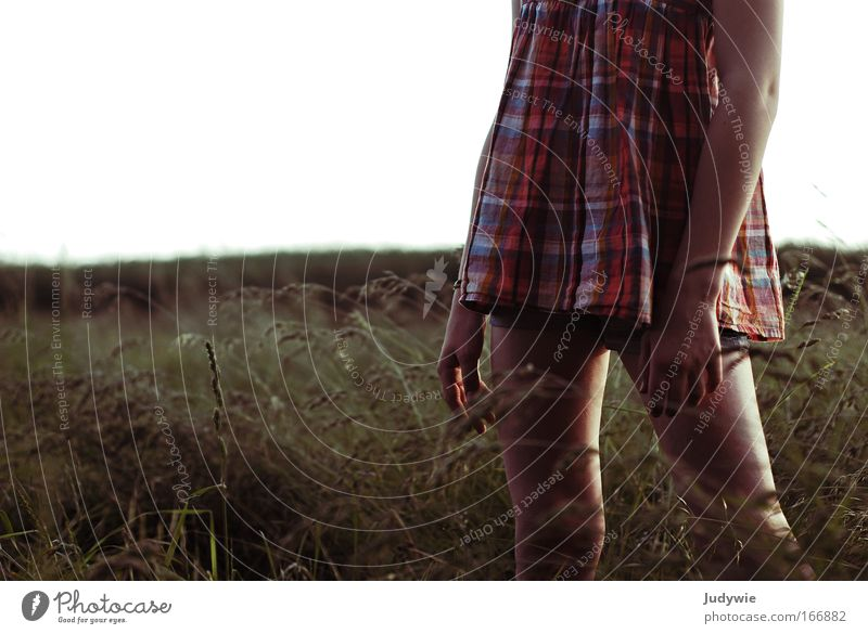 Titellos Mensch Natur Jugendliche Sommer Erholung feminin Wiese dunkel kalt Erotik Gras Traurigkeit Frühling Feld Kraft Wind