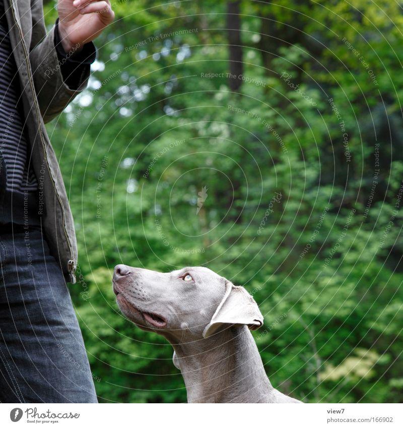 Leckerli Mensch grün Baum Pflanze Freude Tier Erwachsene Hund Umwelt Spielen grau warten authentisch Sträucher beobachten 18-30 Jahre