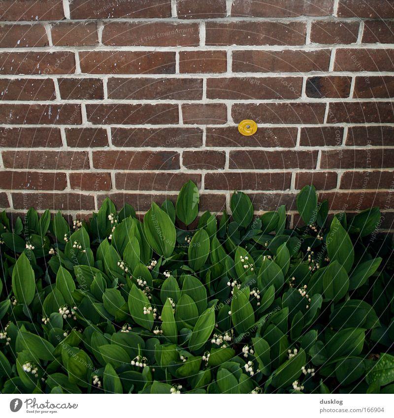 es grünt so grün I Blume grün Pflanze Haus Tier Wand Blüte Gras Garten Mauer Gebäude Umwelt Fassade frisch Fröhlichkeit Wachstum