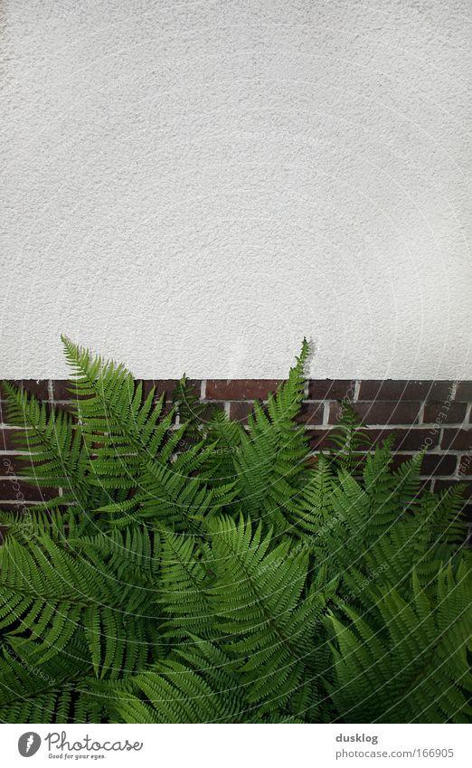 es grünt so grün II Farbfoto Außenaufnahme Muster Strukturen & Formen Menschenleer Tag Totale Umwelt Natur Pflanze Tier Gras Sträucher Farn Grünpflanze Garten