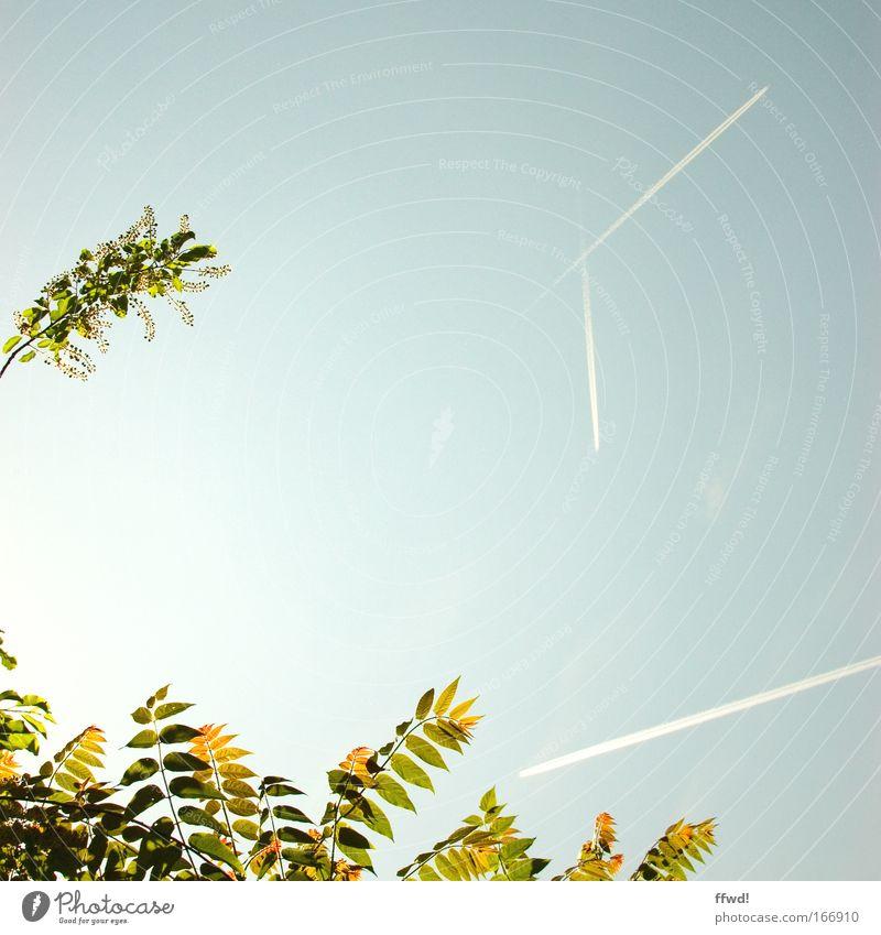 [PC-Usertreff Ffm]: Fluglotsenstreik Natur Himmel Baum Pflanze Sommer Ferien & Urlaub & Reisen Blatt Frühling Freiheit Flugzeug Umwelt fliegen frisch