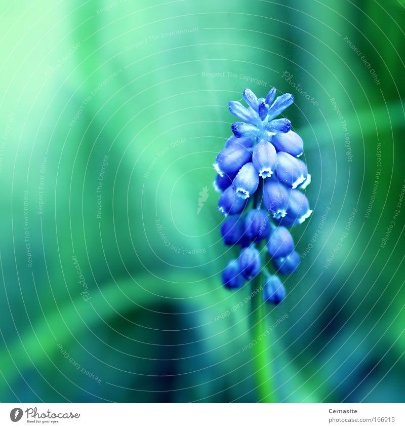 Natur blau grün schön Pflanze Sommer Blume Farbe Wärme Gras Blüte wild natürlich Sträucher Schönes Wetter Gelassenheit