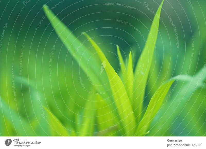Natur grün schön Pflanze Sommer Farbe gelb Gras Erde hell Erde Wetter Schönes Wetter Neugier Blühend Gelassenheit