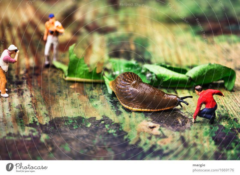 Miniwelten - Schnecken - Matador Mensch Ferien & Urlaub & Reisen Mann grün rot Blatt Erwachsene braun Tourismus maskulin Ausflug Abenteuer Löwenzahn Zoo Fleisch Figur