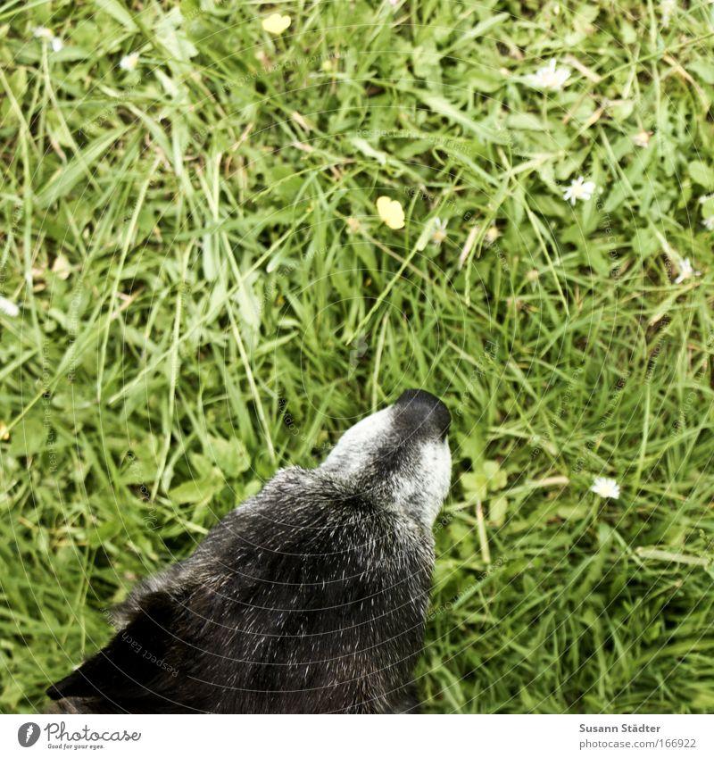 Schnüffel schnüffel schnüffel Pflanze Sommer Blume Blatt Tier Wiese Garten Gras Blüte Hund Park Erde Ausflug wandern Nase Sträucher