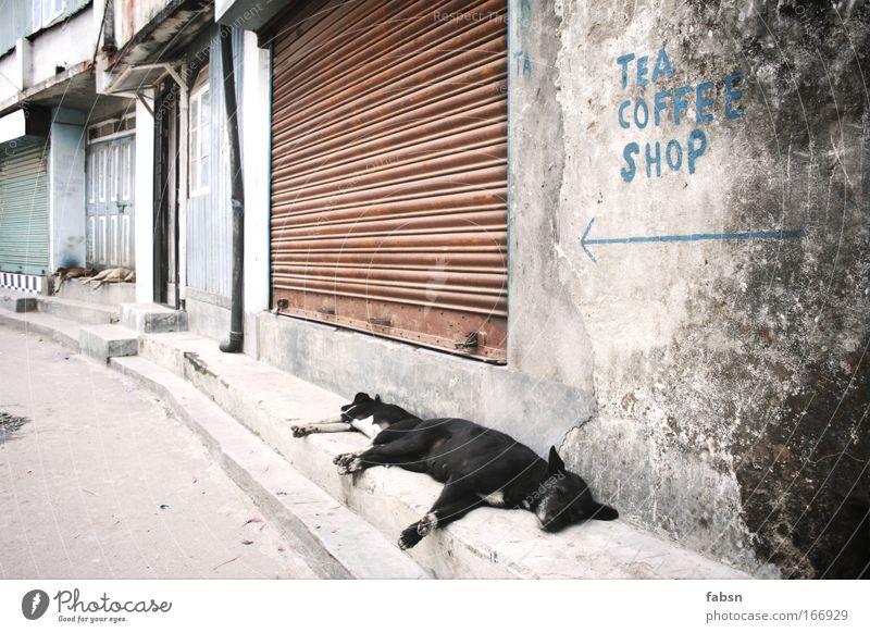 TEA COFFEE SHOP Stadt Haus Tier Fenster Hund Gebäude Tierpaar Tür Fassade schlafen geschlossen paarweise Tiergruppe Dorf Pfeil Café