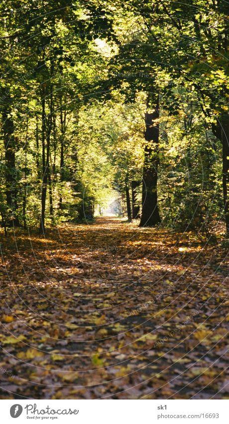 Herbstweg Blatt Wald Licht Waldlichtung Karlsruhe Wege & Pfade Schlossgarten
