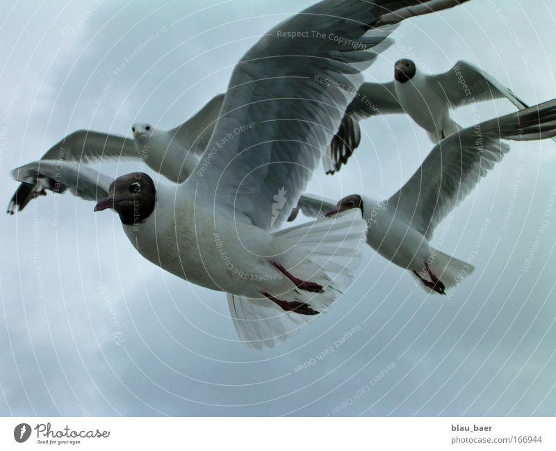 Freiflug Natur Himmel Tier Herbst Luft Vogel fliegen ästhetisch Tiergesicht Flügel Sturm Neugier Wildtier