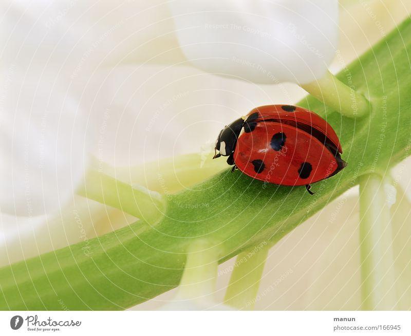Alles Gute und viel Glück! Jubiläum grün weiß schön Pflanze rot Sommer Tier Blüte Frühling Feste & Feiern Geburtstag Blume Erfolg Zukunft