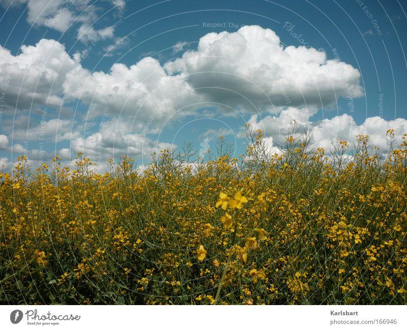 empfängnis. Himmel Natur Ferien & Urlaub & Reisen Sommer Wolken Erholung Umwelt Freiheit Gesundheit Feld Klima Energiewirtschaft wandern Ausflug Design Sommerurlaub