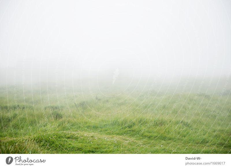 Nebel zieht auf Ferien & Urlaub & Reisen Abenteuer Ferne Umwelt Natur Landschaft Frühling Herbst Klimawandel Wetter schlechtes Wetter Unwetter Wiese weiß