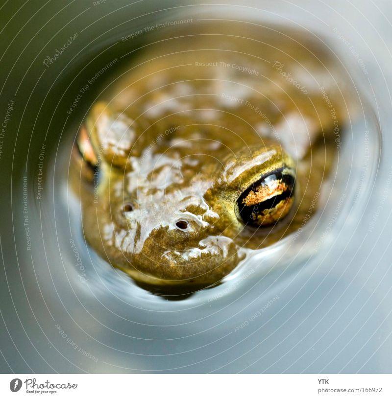 Das Monster aus der Tiefe Farbfoto Außenaufnahme Makroaufnahme Textfreiraum unten Tag Schatten Kontrast Reflexion & Spiegelung Lichterscheinung Unschärfe