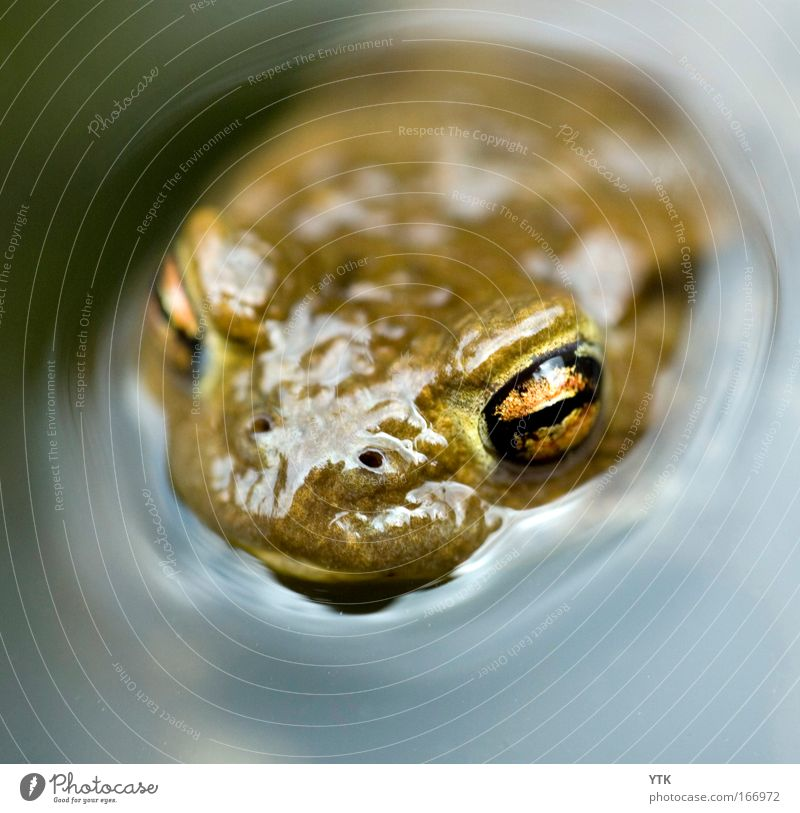 Das Monster aus der Tiefe Natur blau Wasser grün Tier Auge dunkel Gefühle Schwimmen & Baden nass natürlich außergewöhnlich gefährlich bedrohlich Neugier Schutz