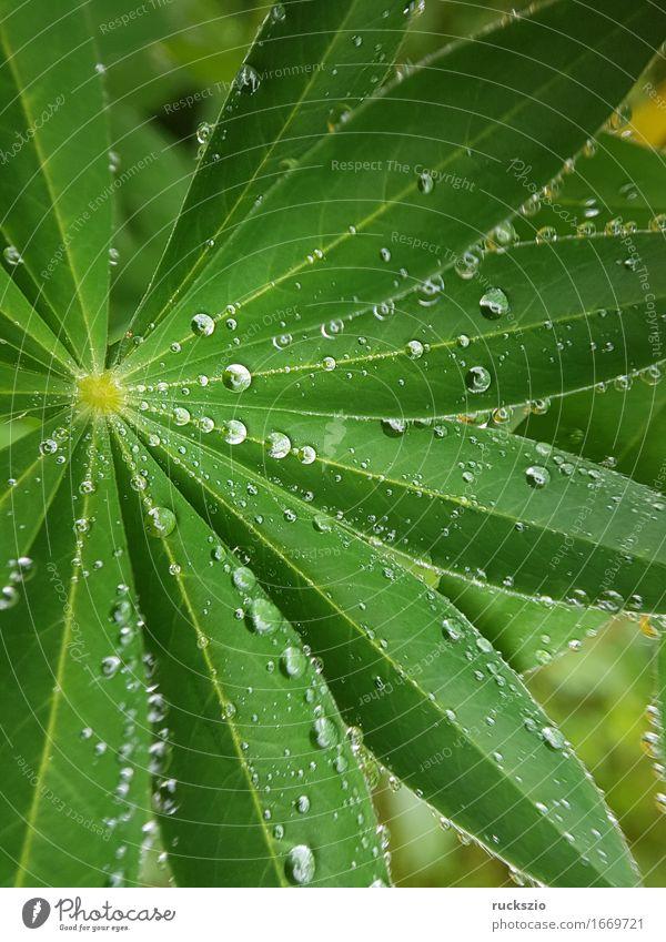 dewdrops; Weed; Water; Structure; Dew; Raindrops Natur Wasser Wassertropfen Blatt ästhetisch nass Tau Struktur Regentropfen Nebeltropfen Perle Tauperle