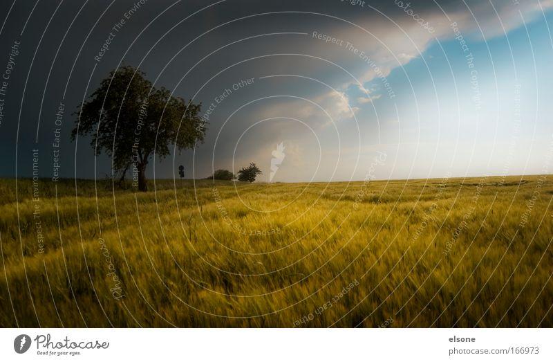 SUBTROPEN IN DEUTSCHLAND Natur Baum grün blau Sommer gelb dunkel Gras Wärme Regen Landschaft Erde Kraft Feld Angst Wind