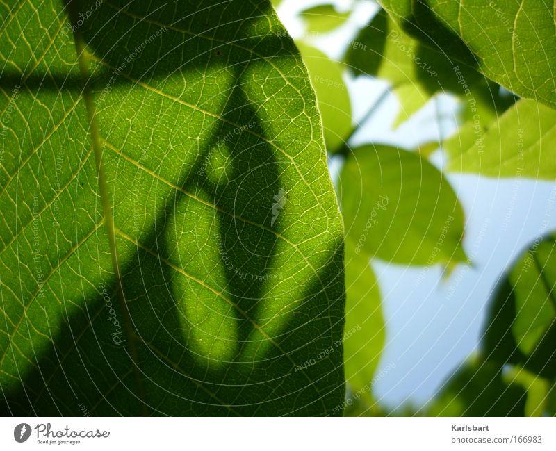 heraus in eure schatten. rege wipfel. Natur schön Himmel Baum Sonne grün Sommer Blatt Leben Erholung Bewegung Frühling Glück Zufriedenheit Design Umwelt