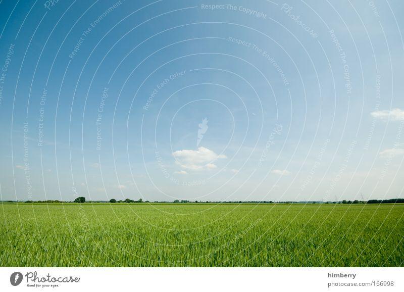 schöne pfingsten Natur Himmel Pflanze Sommer ruhig Wolken Leben Erholung Wiese Stil Frühling Freiheit Landschaft Zufriedenheit Feld Gesundheit