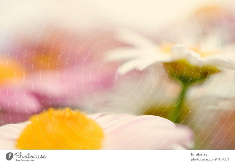 und an die mama denken jungs Natur schön Pflanze Blume ruhig Erholung Umwelt Blüte Stil Park Zufriedenheit frisch ästhetisch Dekoration & Verzierung Lifestyle