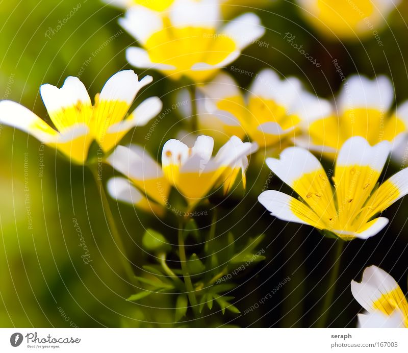 Blümchen Natur Pflanze frisch Wachstum Dekoration & Verzierung wild Lebewesen Botanik Gartenarbeit Stempel pflanzlich Staubfäden Blumenhändler Blütenstempel