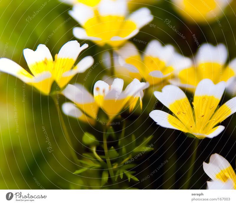 Blümchen Staubfäden stamp bloom blooming flowerhead blossom florescence flower flowering Wachstum Pflanze flora geblümt Botanik pflanzlich petals detail Natur