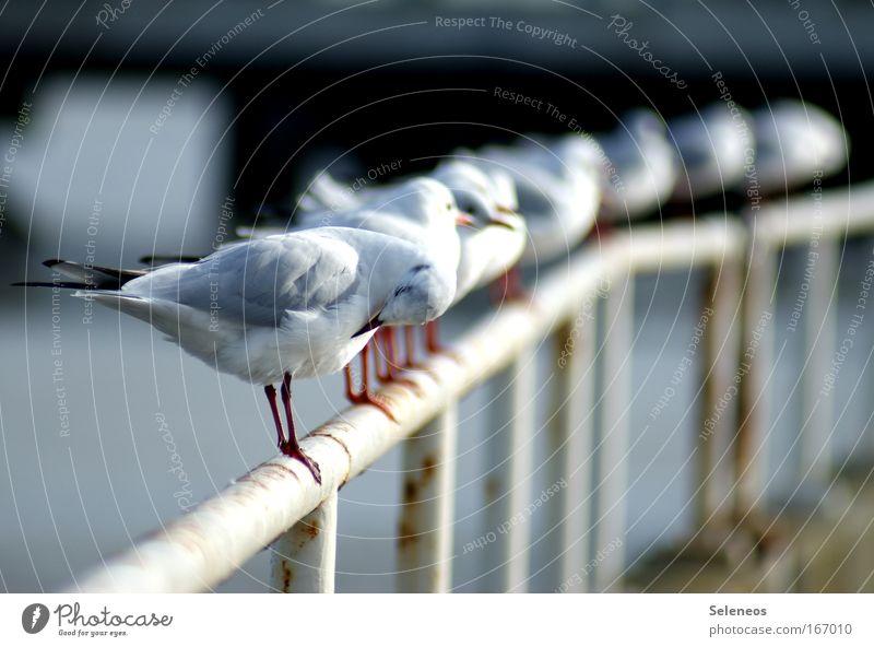 immer putzen Wasser weiß blau Tier Bewegung Denken Zusammensein Vogel Metall Umwelt Tiergruppe stehen Tiergesicht Flügel Sauberkeit Reinigen