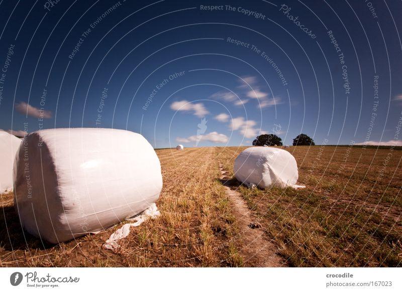 Marshmallow Feld Farbfoto Außenaufnahme abstrakt Menschenleer Textfreiraum rechts Textfreiraum oben Tag Schatten Kontrast Sonnenlicht Langzeitbelichtung