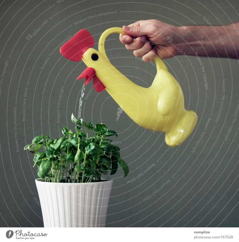 Nutztier Mensch maskulin Mann Erwachsene Hand 1 Grünpflanze Topfpflanze Tier Spielzeug Gießkanne Blühend dehydrieren Wachstum Duft muskulös retro saftig gelb