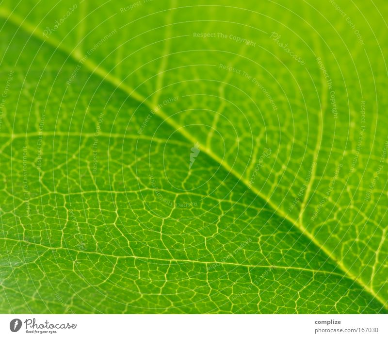 Die Grünen Natur grün schön Baum Pflanze Sonne Sommer Blatt Umwelt Frühling Klima Umweltschutz Klimawandel Umweltverschmutzung Grünpflanze