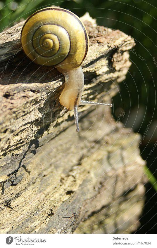 gehts da runter...? ruhig Tier Holz Neugier Wildtier Schnecke