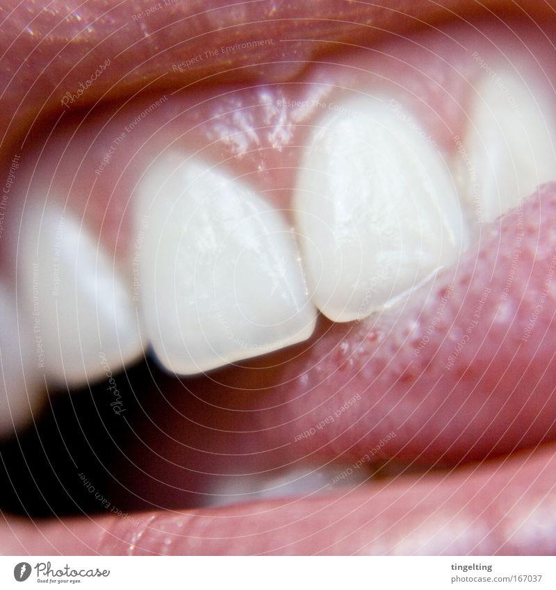 zähnchen weiß rot Freude feminin Zufriedenheit Mund rosa nass glänzend Zähne Lippen nah berühren Zunge Tier