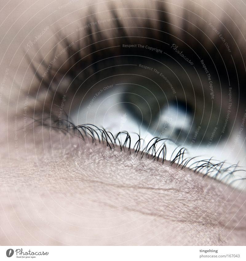 klimper-wimper weiß Auge feminin Denken Haut nah Gesicht Wimpern Pupille
