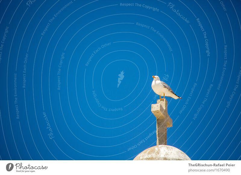 Möve blau weiß Tier gelb grau Freiheit fliegen oben braun Vogel Aussicht Kirche Pause Dach Möwe Kreuz