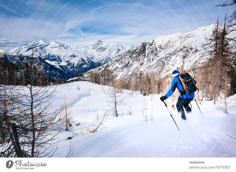 Wintersport: Mannskifahren im Puderschnee. Mensch Himmel Natur Ferien & Urlaub & Reisen blau weiß Baum Landschaft Erholung Freude Wald Berge u. Gebirge