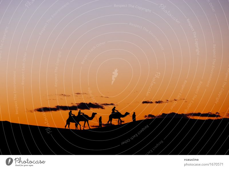 Eine kleine Gruppe Touristen während eines Kameltrekkens bei Sonnenuntergang schön Erholung Meditation Ferien & Urlaub & Reisen Tourismus Ausflug Abenteuer