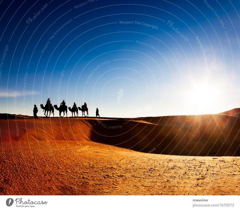 Exotisches Abenteuer: Turist Reiten Kamele auf Sanddünen exotisch schön Erholung Ferien & Urlaub & Reisen Tourismus Ausflug Expedition Sommer Mensch Mann
