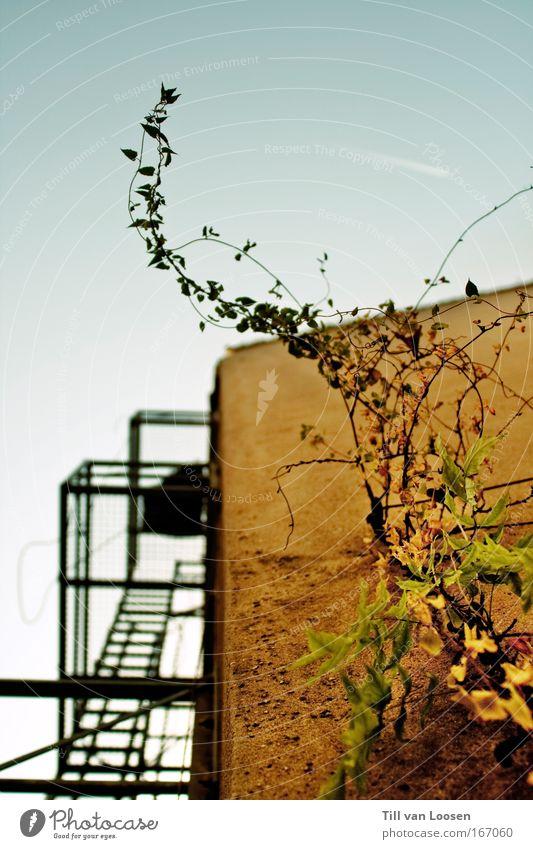 escaping mankind Himmel blau grün Pflanze Haus Wand Architektur grau Stein Mauer Fassade Hochhaus Wachstum Bauwerk Blühend Wolkenloser Himmel