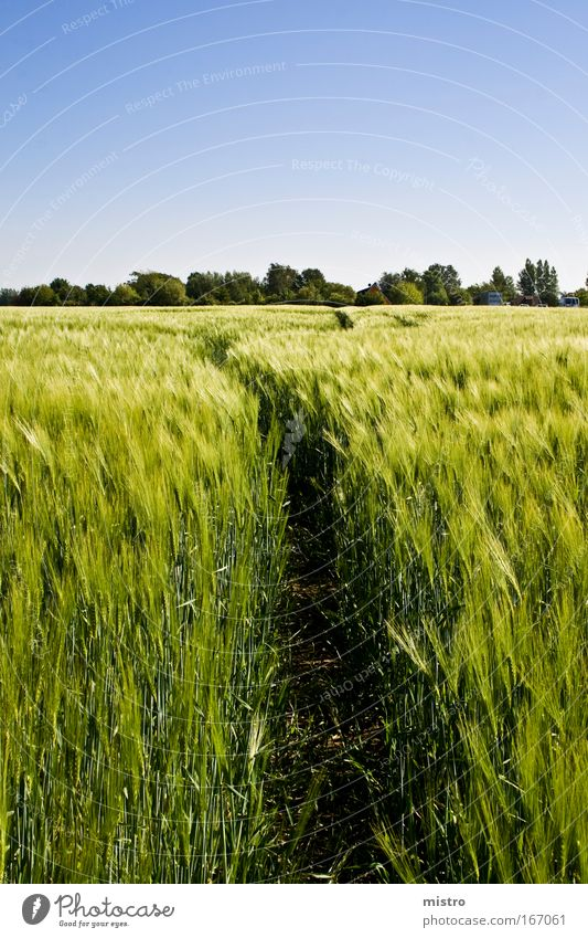 Der Weg ins Vergnügen Himmel Natur blau grün schön Sommer Pflanze Erholung Landschaft gelb Wiese Gefühle Frühling Wege & Pfade Garten Feld