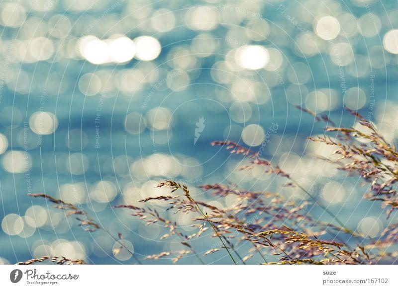 Was glitzert ... Natur blau Wasser Ferien & Urlaub & Reisen Pflanze Sommer Umwelt Landschaft Leben Freiheit Gras See träumen Wind Hintergrundbild glänzend