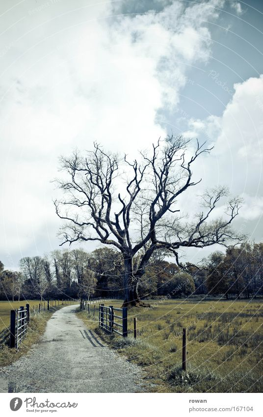 vogelscheuche Farbfoto Außenaufnahme Menschenleer Textfreiraum oben Landschaft Baum Feld bedrohlich dunkel gruselig trist Tod Geäst Wege & Pfade Spaziergang
