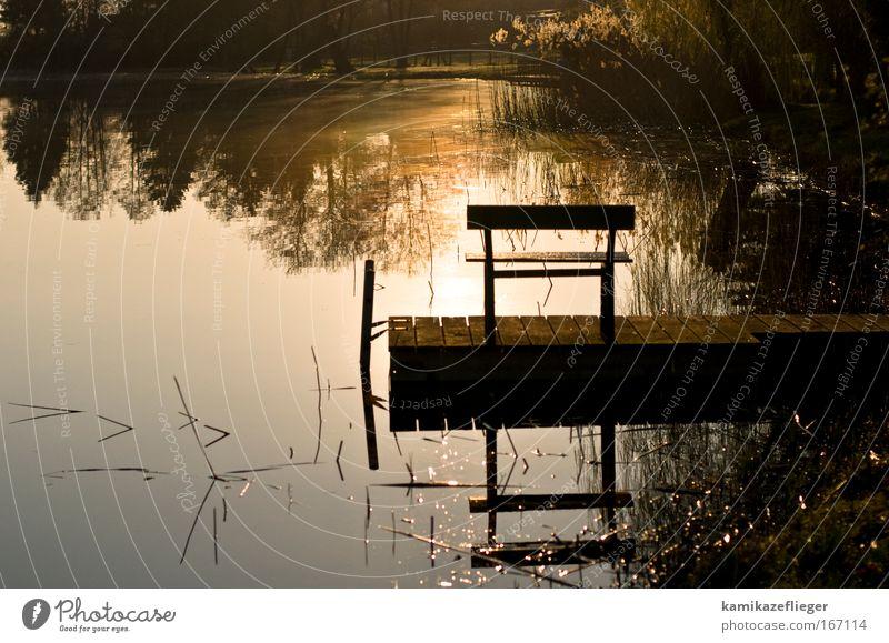 vor dem angeln Natur Wasser Sommer Landschaft See Stimmung Bank Schönes Wetter Seeufer Schilfrohr Steg Angeln Sonnenaufgang Sonnenuntergang