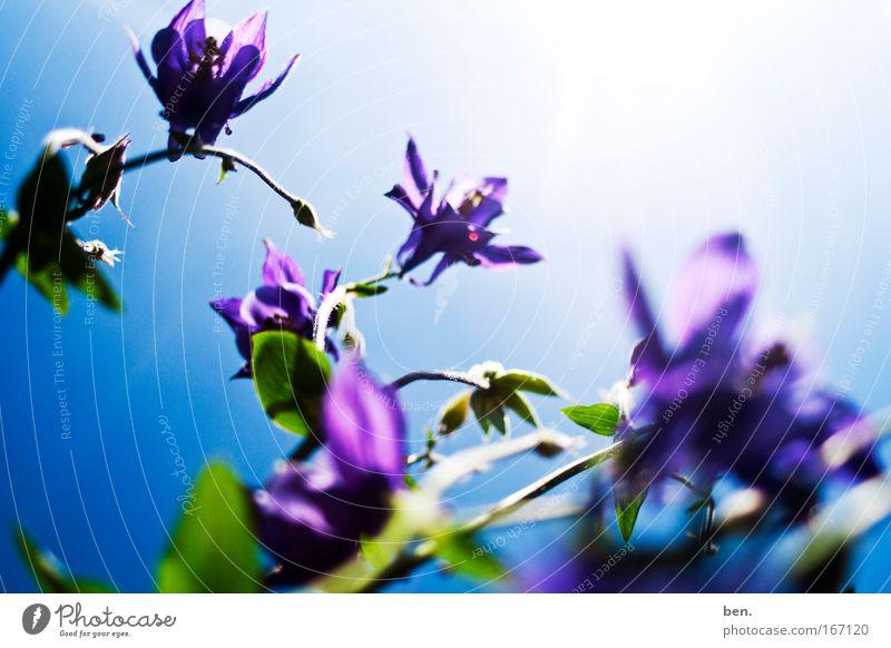 Ein Samstagsfoto Farbfoto Außenaufnahme Licht Sonnenlicht Sonnenstrahlen Gegenlicht Froschperspektive Umwelt Natur Pflanze Himmel Sommer Schönes Wetter Blume