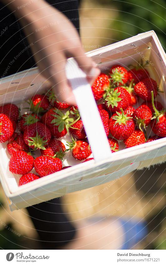 Sammlerin II Natur Pflanze Sommer grün Hand rot Frühling Gesundheit Frucht Feld Ernährung Schönes Wetter süß Landwirtschaft lecker Bioprodukte