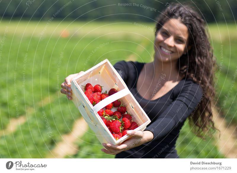 Sammlerin III Mensch Natur Jugendliche Pflanze Sommer grün Junge Frau rot Freude 18-30 Jahre Erwachsene Frühling feminin Gesundheit Frucht Feld