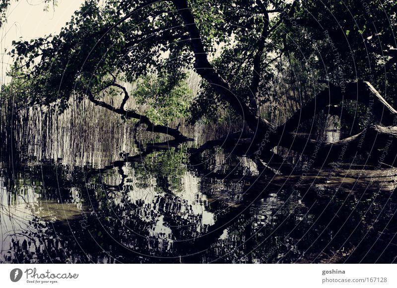 Doppelwelt Natur Wasser Baum Pflanze ruhig Landschaft Glück Küste See Stimmung Park Zufriedenheit Romantik Idylle Schönes Wetter Seeufer