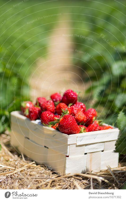 Ausbeute Natur Pflanze Sommer grün rot gelb Frühling Gesundheit Lebensmittel Frucht Feld Ernährung Schönes Wetter süß Landwirtschaft lecker