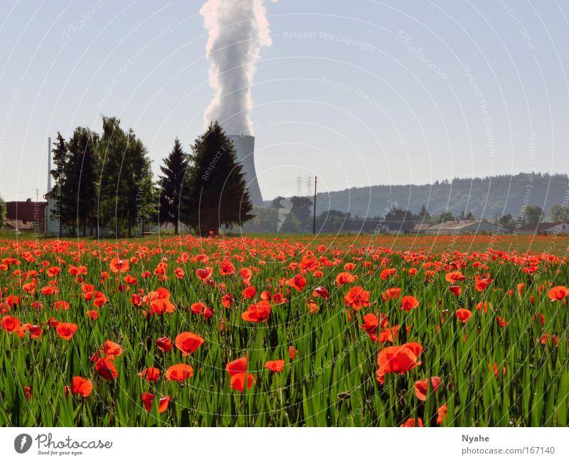 Umweltkontraste Natur Himmel Sonne Blume grün Pflanze rot Sommer Landschaft Kraft Feld Umwelt groß Mohn Energiewirtschaft bedrohlich